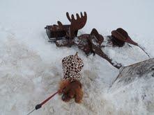 Cavalier king charles spaniel puppies for sale michigan radle breeder petoskey