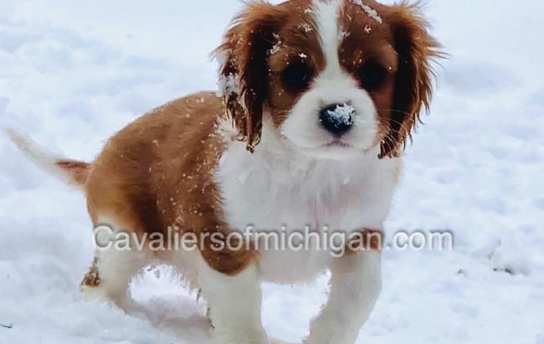 Diana Jontz in the snow